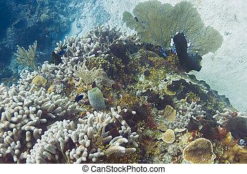 大西洋, 珊瑚礁