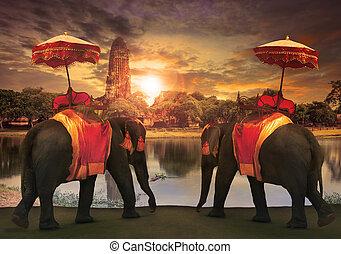 大象, 穿著, 由于, 泰國, 王國, 傳統, 附件, 站立, 前面, 老, 塔, 在, ayuthaya, 世界,...