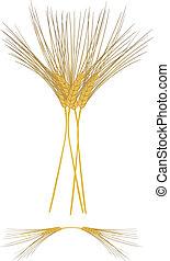 大麦, さや