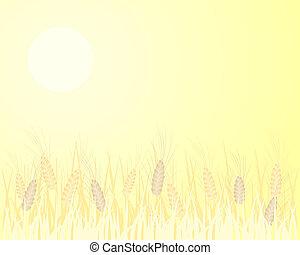 大麦, 背景