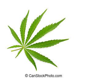 大麻, 被隔离, 葉子