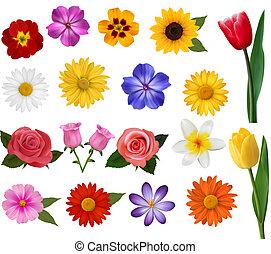 大, 彙整, ......的, 鮮艷, flowers., 矢量, illustration.