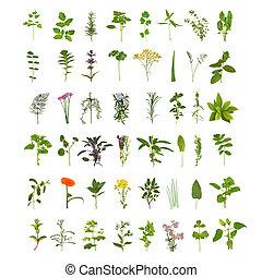 大, 藥草, 葉子, 以及, 花, 彙整