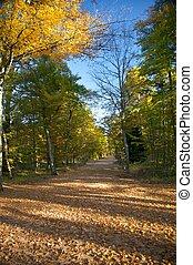 大, 路径, 公园, 秋季