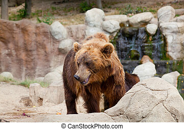 大, kamchatka, 棕色的熊, 在中間, 石頭, 在, the, 木頭