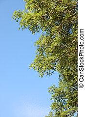 天空, 樹