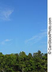 天空, 樹, 背景