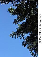 天空, 樹, textured