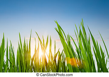 天空, 草, 綠色, 黃昏