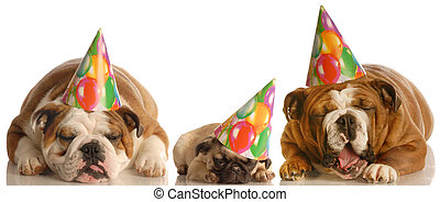 太多, 生日聚會