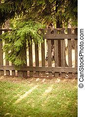 太阳发光, 通过, 木制的栅栏