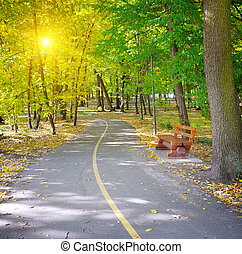 太阳的光线, 在中, 秋季, 公园