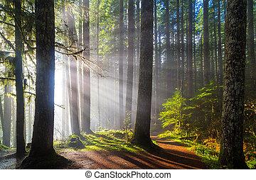 太陽光線, 前方へ, ハイキング, 道