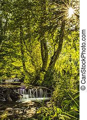 太陽光線, 滝, 照らされた, 森林