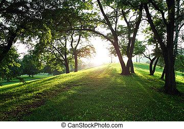太陽, 中に, ∥, 緑, 春, 公園