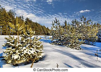 太陽, 冬天, 天, 在, 木頭, belarus