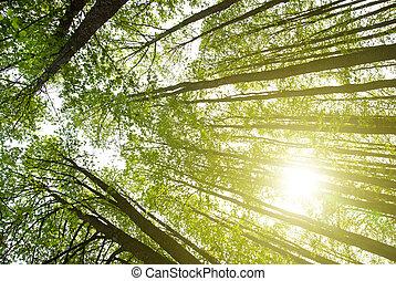 太陽, 在, 森林