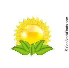 太陽, 抽象的, 隔離された, 葉, 緑の背景, 白