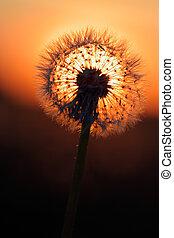 太陽, 火の玉
