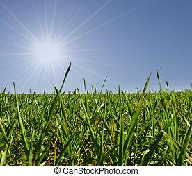 太陽, 草