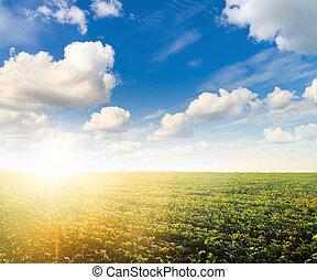 太陽, 草, 綠色的天空