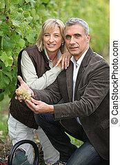 夫婦, 收集, 葡萄