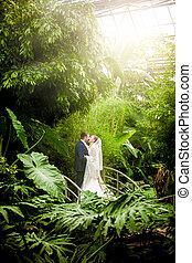 夫婦, 結婚, 陽光普照, 雨林, 親吻, 天