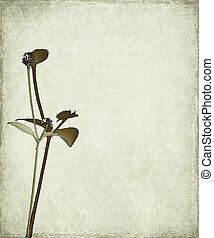 头, 种子, 背景, 长的茎干