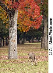 奈良, 鹿, 公園, 牧草