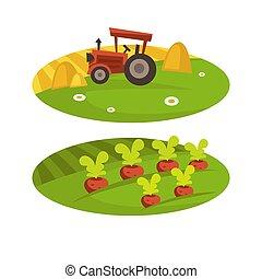 套間, 農田, 小麥田地, 農場, 收穫, 干草, 矢量, 農業, 卡通, 拖拉机