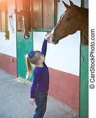 女の子, なでること, a, 馬, 中に, a, 安定した