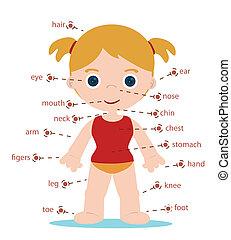 女の子, 体の部位