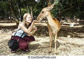 女の子, 供給, 鹿, 若い