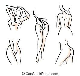 女性の体, 部分