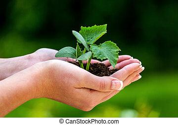女性の保有物, 植物, 中に, 手