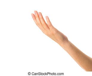 女性, やし, 手