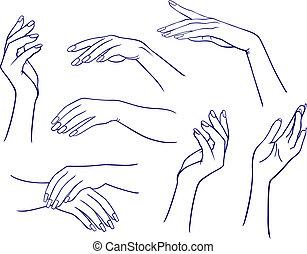 女性, セット, 手