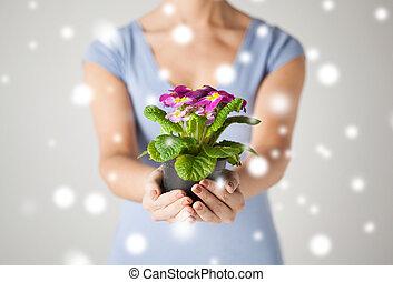 女性, ポット, 花, 手を持つ