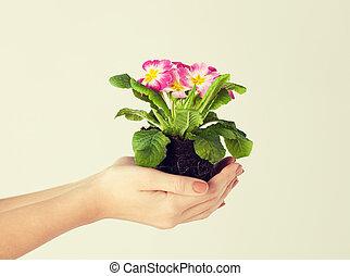 女性, 土壌, 花, 手を持つ
