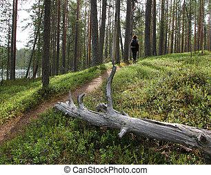 女性, 徒步旅行者, 上, 森林, 形跡