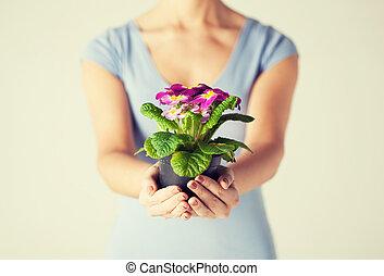 女性, 手, 保有物の花, 中に, ポット