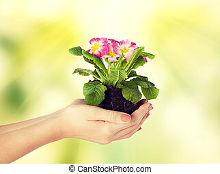 女性, 手, 保有物の花, 中に, 土壌