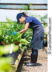 女性, 温室, 仕事, 庭師