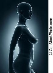 女, 中に, 解剖, ポジション, x 線, 横の視野