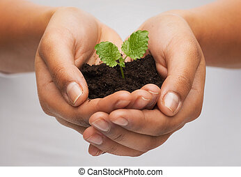女, 手, 保有物, 植物, 中に, 土壌