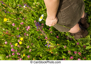 女, 牧草地, 若い, の上, 花, 終わり