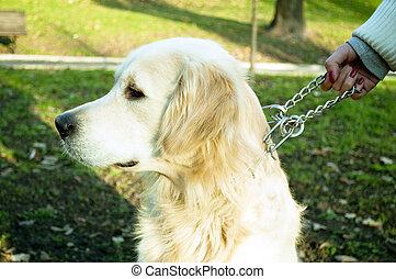 女, 犬, 鎖, 保有物