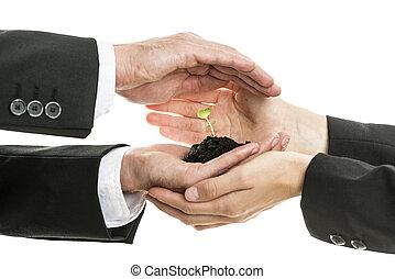 女, 肥沃, 実生植物, 土壌, 杯形, ビジネスマン, 手, 成長する, 保護, ∥(彼・それ)ら∥