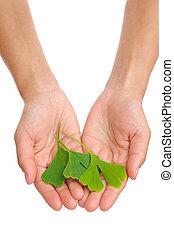 女, 葉, 若い, 銀杏, 手を持つ