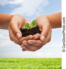 妇女, 手, 握住, 植物, 在中, 土壤